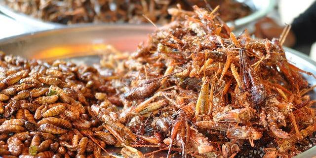 Insekten als Potential - Unternehmensberatung - Nachhaltigkeit, Innovation & Regionalentwicklung