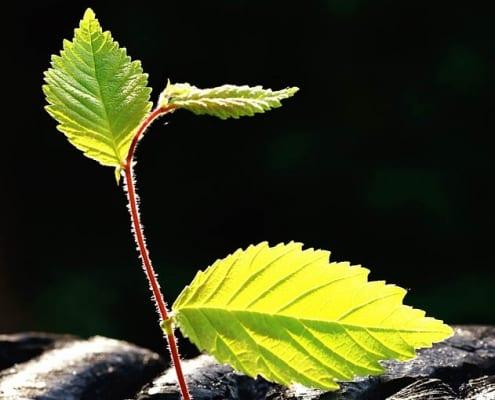 CLT Unternehmensberatung - Nachhaltigkeit, Innovation & Regionalentwicklung