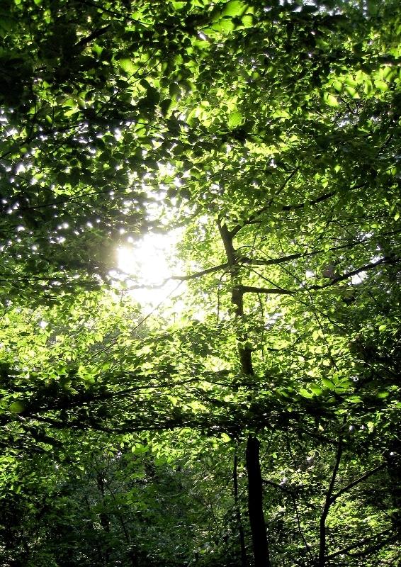 Life Cycle Analysis in der Nachhaltigkeits- Innovationsberatung - Wald